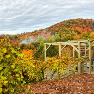Vineyard Overlook